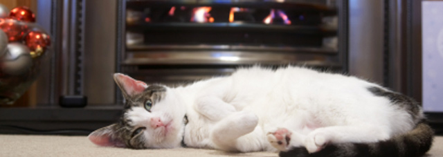 Cat by a lit fire